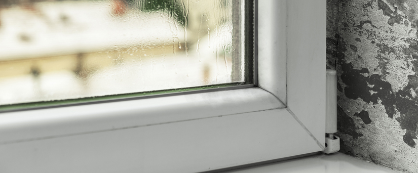 Moho en casa affordable por qu sale moho en mi casa with - Quitar manchas de moho en paredes sin lejia ...