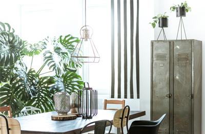 las plantas de interior tienen poder decorativo en cualquier rincn de la casa pero en su colocacin debemos prever el espacio que necesitarn cuando