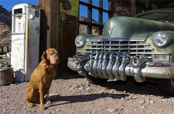 Perro y coche