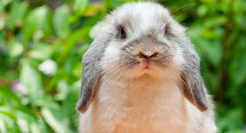 constipado conejos