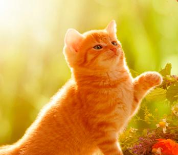 Comida gato