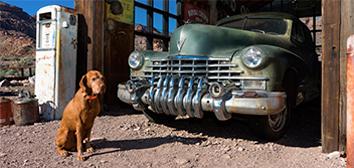 Perro junto a un coche