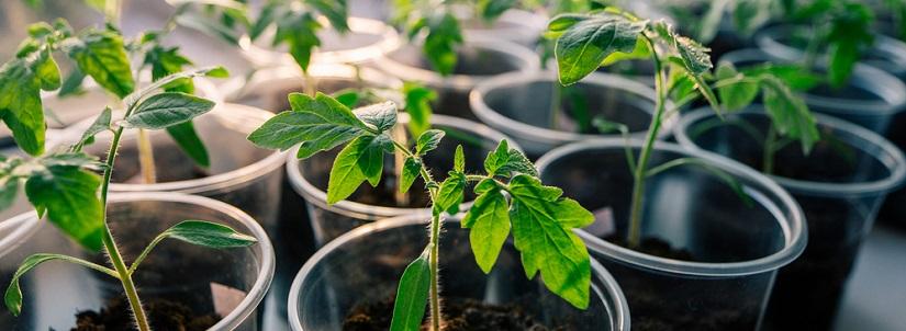 semillas huerto