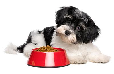 Cuidados especiales para perros minis - Escaleras para perros pequenos ...