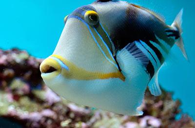 15 enfermedades comunes en peces tropicales - Peces tropicales fotos ...