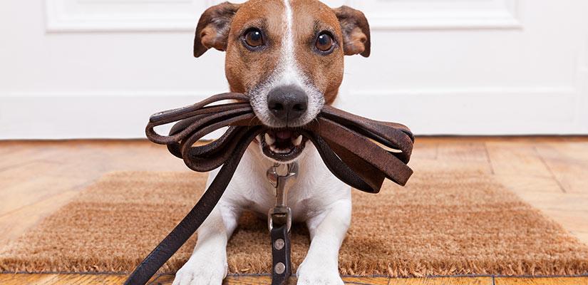 Qué debo llevar al salir de paseo con mi perro?