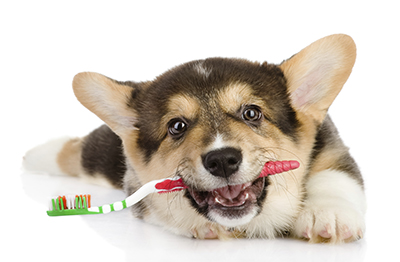 higiene perros